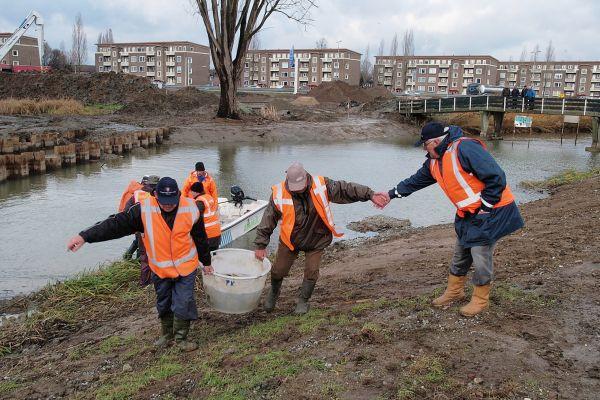 verplaatsen vissen Geusseltvijver - Reen van Beek.jpg