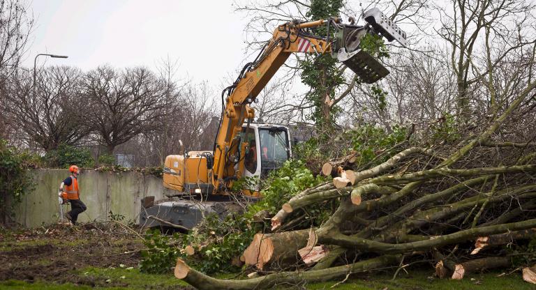 Bomenkap - Robert Lambrix.jpg